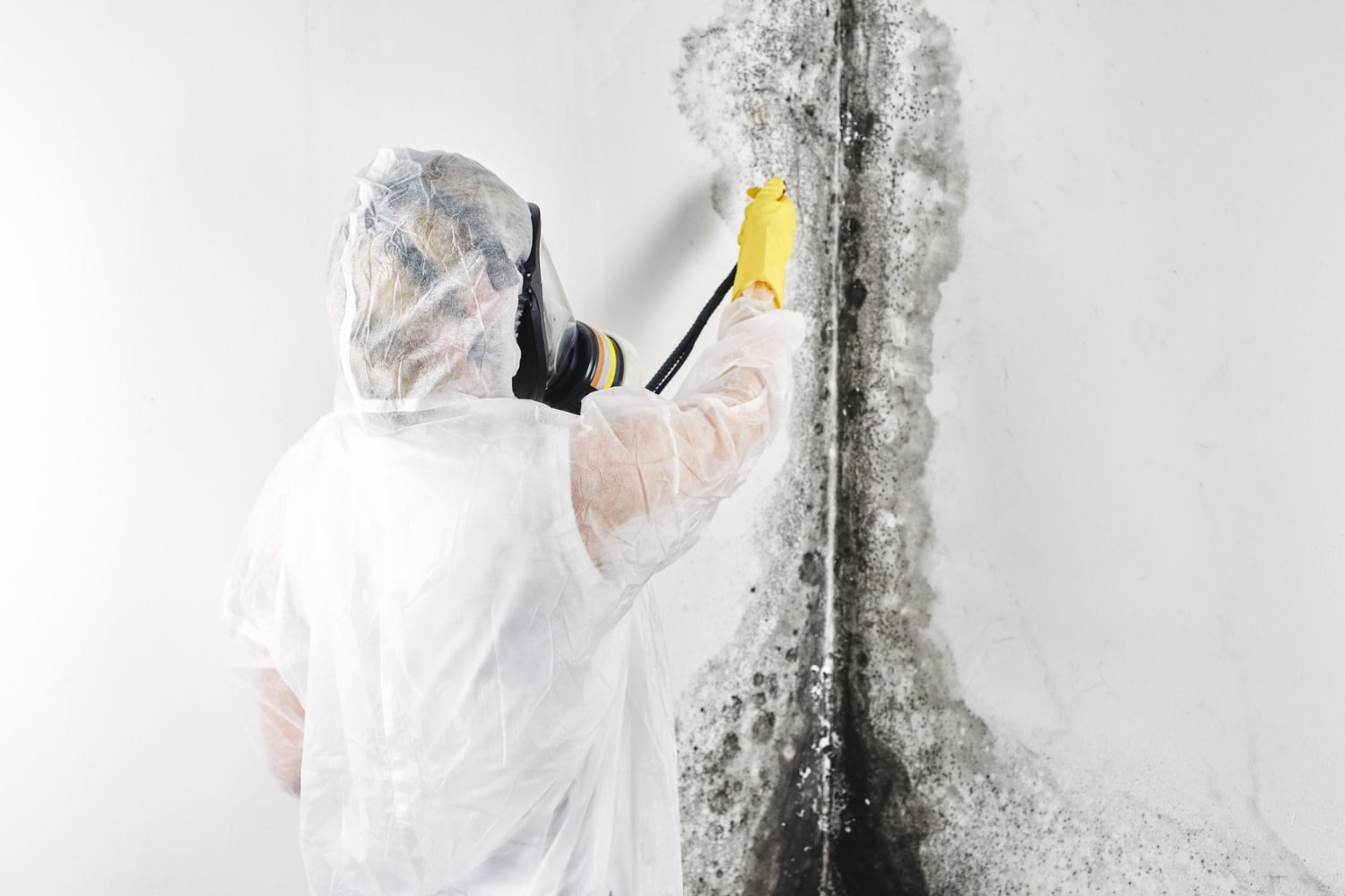 mold removal cost