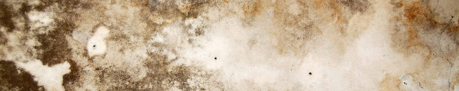 Mold Cleanup Expert